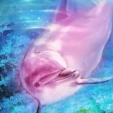 Dolphin Frequency 5