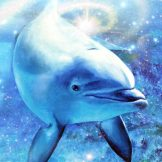 Dolphin Frequency 8