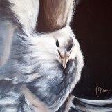 dove-paloma-blanca-proposito-florencia-burton-despegue