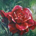 florencia-burton-carmin-rose