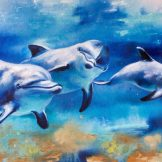 dolphins-journey-florencia-burton-kauai-hawaii-honolulu-snorkeling-tour