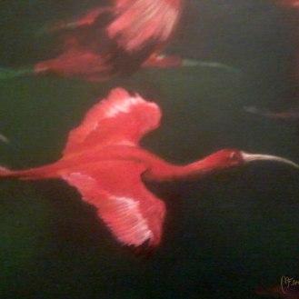 detail-II-Ibis-escarlata-bandada-florencia-burton