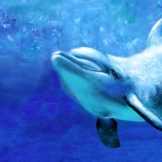 8 x 12 dolphin II welcome Fine Art Paper Prints copy
