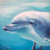 abundance-dolphin-face-swimming with--florencia-burtonabundance-dolphin-art-reef-kauai-hawaii-maui-snorkel-dolphins-blessings-florencia-burton-