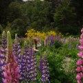 alegria-joy-florencia-burton-garden-sanctuary-flowers-patagonia