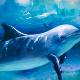 Dolphin Frequency 13